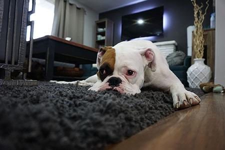 szőnyegtisztításról
